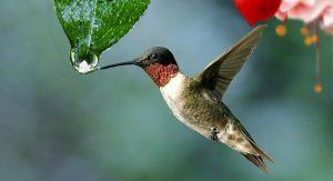 Why Agile PMOs Are Like Hummingbirds 1