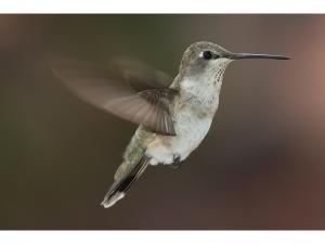 Why Agile PMOs Are Like Hummingbirds 5