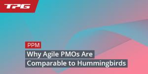 Why Agile PMOs Are Like Hummingbirds